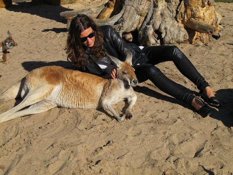 Meeting the Kangaroos and Koala's
