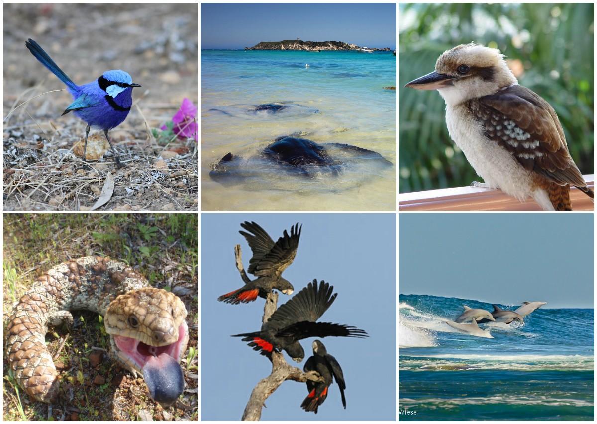 australian-wildlife