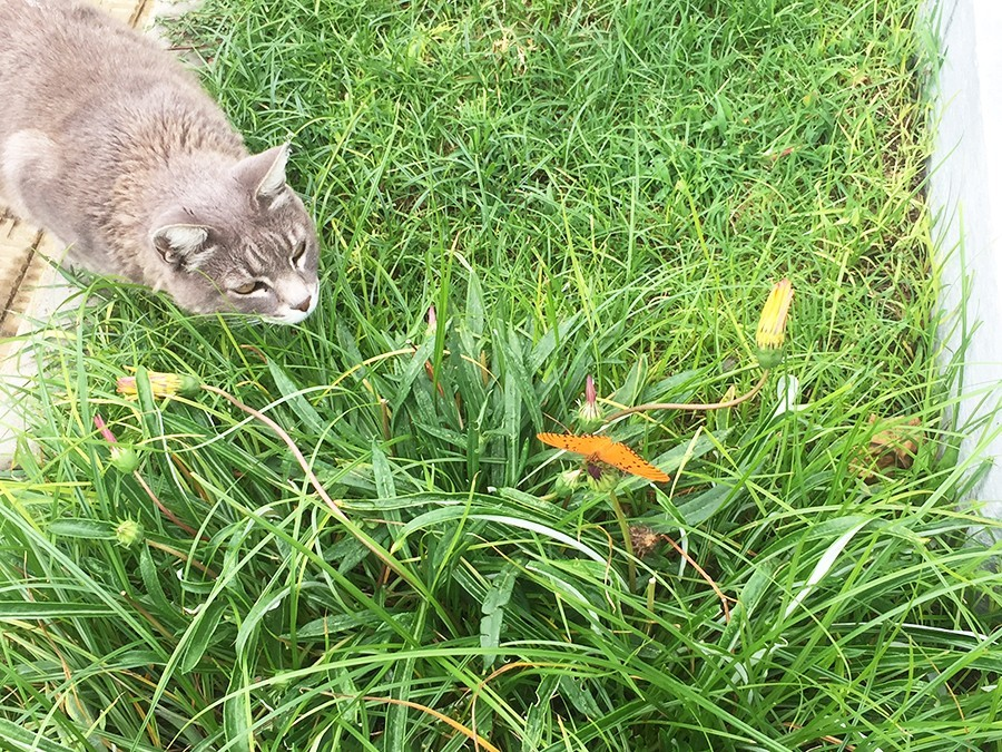 cat-vs-butterfly