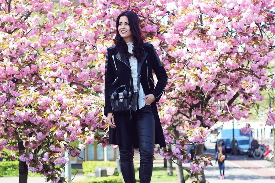 cherry-blossom-tree-amsterdam