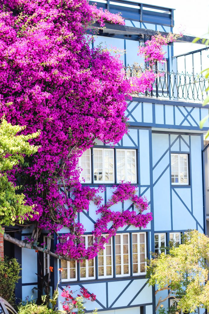 house-lombardstreet-flowers-purple