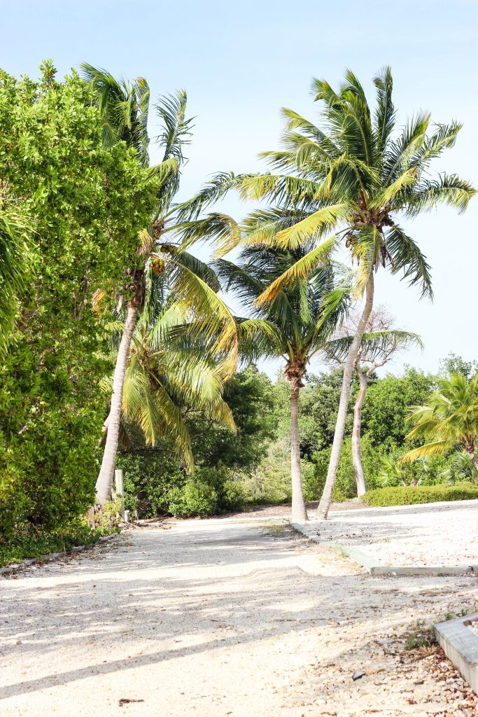 keywest-palmtree-beach